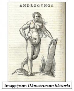 Two hermaprodites sex