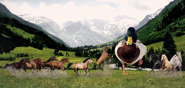 duck-vs-horse-header